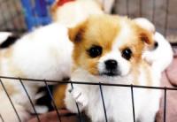 Qingping Pet Market